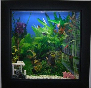 Picture Frame Fish Tank by Jeffrey Beall on flickr 300x291 6 Things an OB/GYN Needs to Know When Taking Care of a Patient with ASD